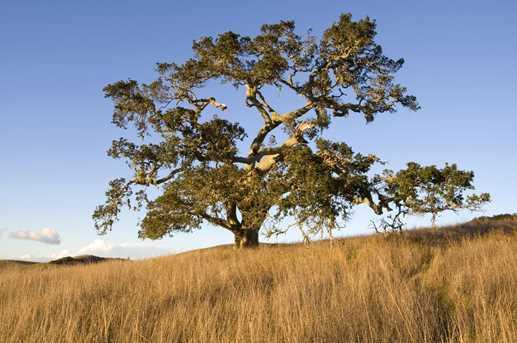 33 Rancho San Carlos Rd - Photo 11