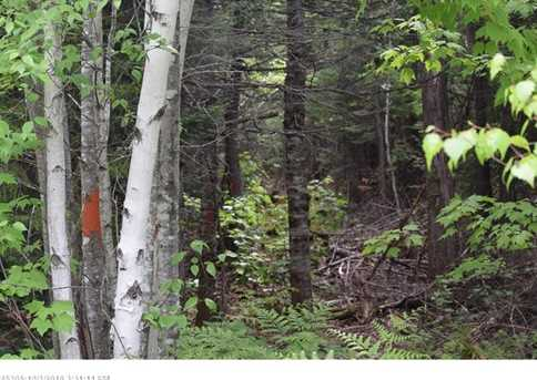 Map 7 Lot 23-2 Maxwell Rd - Photo 5