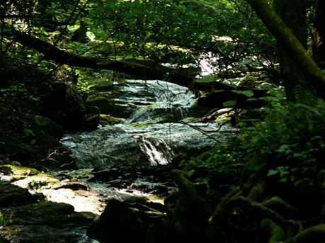 165 Cold Stream - Photo 2