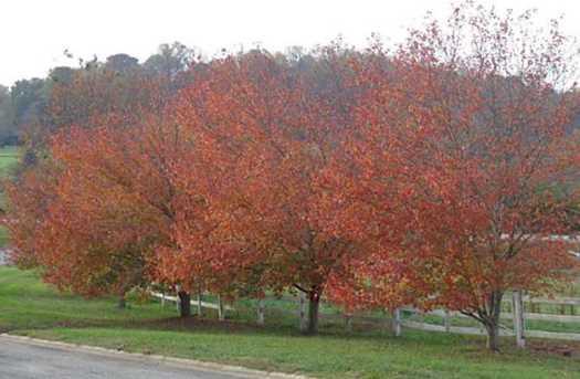 44  45 Wildwood Parkway #44-45 - Photo 2