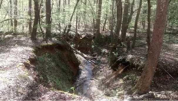 0 Shady Trail - Photo 7