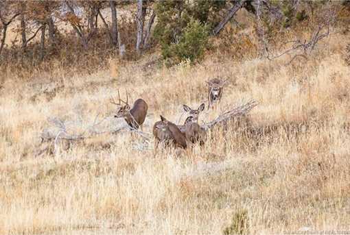 7973 Acres Bear Mountain Ranch - Photo 23