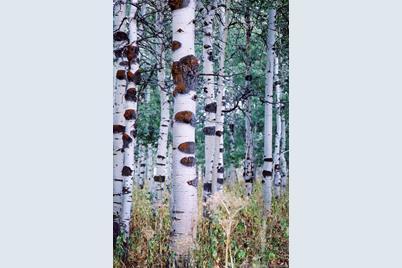 595 Porcupine Loop - Photo 1
