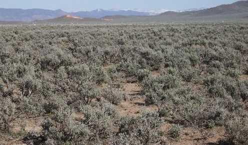 Ne4Se4 Sec 24, T35S R18W #40 acres - Photo 5