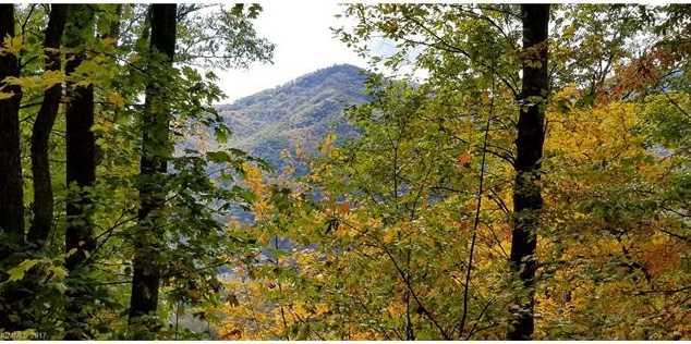 Lot 8 Big Boulder Ridge Road - Photo 11