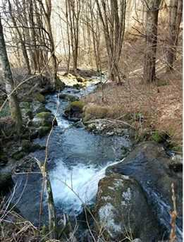 87.23 Acres Off Scronce Creek Road - Photo 19