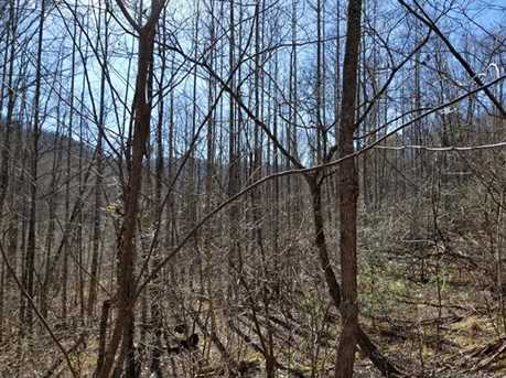 92.99 Acres Off Brush Creek Road - Photo 15