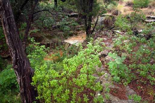 8130  Lime Creek Rd - Photo 3