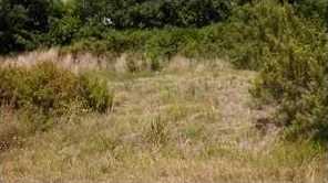 15301  Pheasant Ln - Photo 1