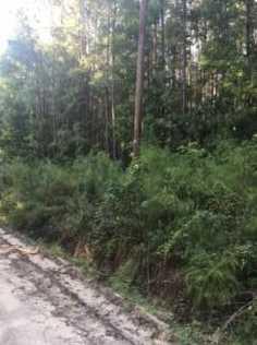 0 Folly Creek Lane - Photo 3