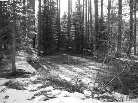 50741 Conifer - Photo 27