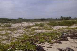 Lot 9 Puerto Morelos - Photo 5