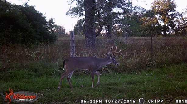 2110 County Road 438 - Photo 31
