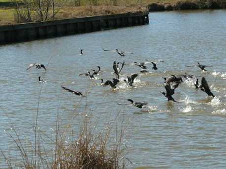155 Wildwood Lake Drive - Photo 9