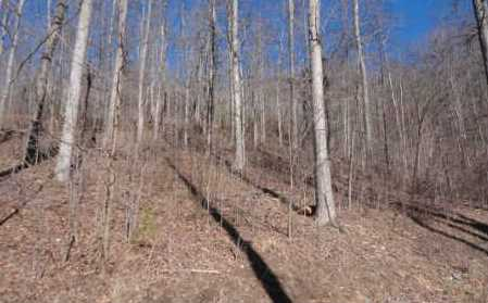 0 Woods Of Hunter #LOT 6 - Photo 7