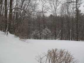 39 Silver Birch Place #1C - Photo 6