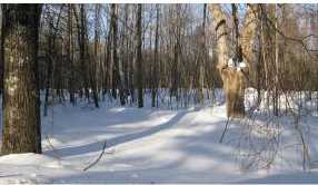 Lot #9 &amp 9-1 Old Wolfeboro Rd - Photo 15
