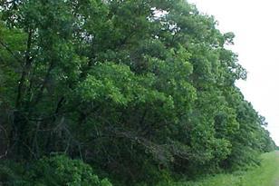 Tbd Wild Acres Road - Photo 1
