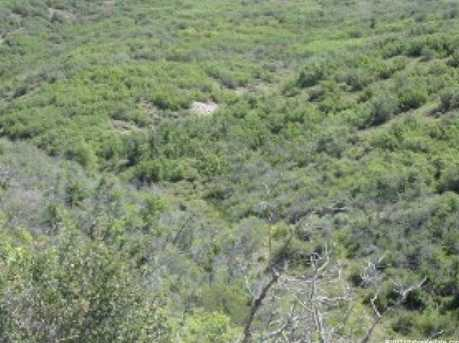 52 Water Hollow - Photo 3