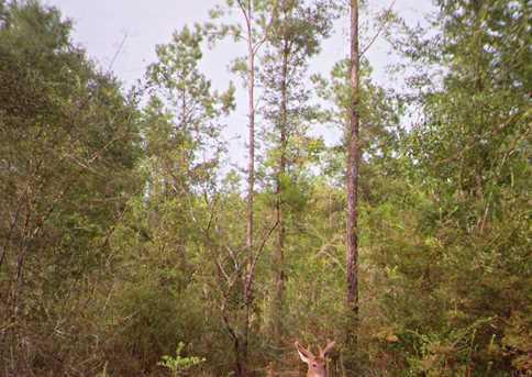 Vacantland Hidden Forest Trail - Photo 17