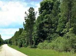 Vacantland Hidden Forest Trail - Photo 3