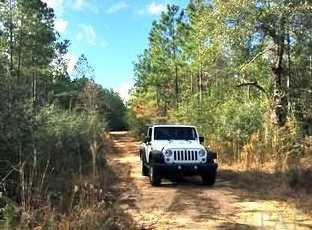 Vacantland Hidden Forest Trail - Photo 5