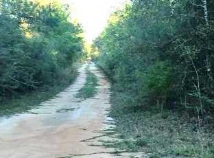Vacantland Hidden Forest Trail - Photo 7