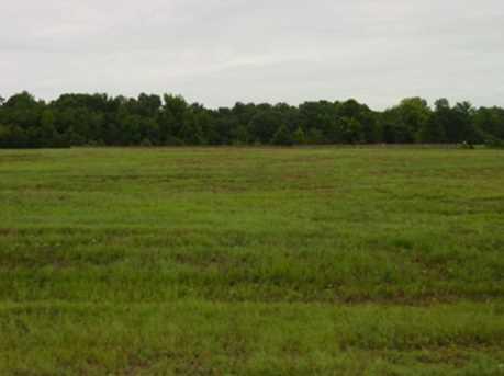 Lot 5 Creekside Hwy 271 Jacobin Creek Dr - Photo 3