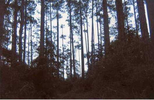 19 Pepper Tree Road - Photo 1
