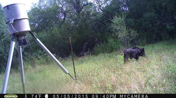 10691 San Antonio River Road - Photo 17