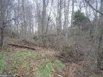 25 Shirley Trail - Photo 1