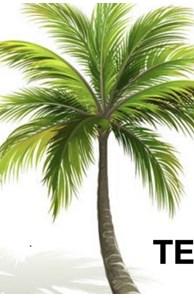 Palm Tree Team